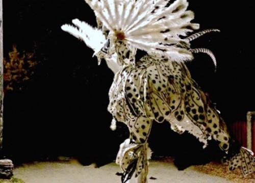 Galerie l'Attribut des Oiseaux Rares